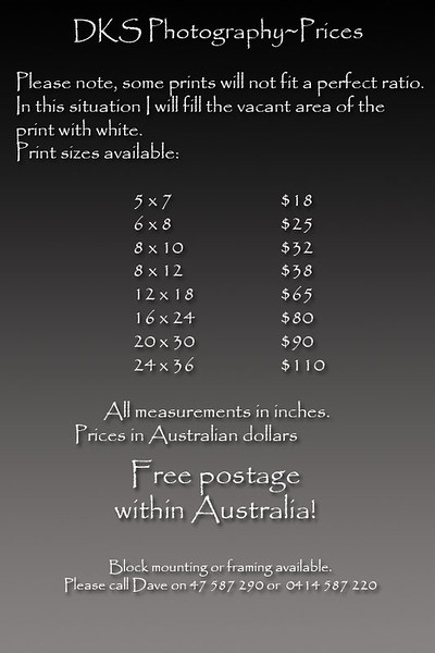 prices for prints