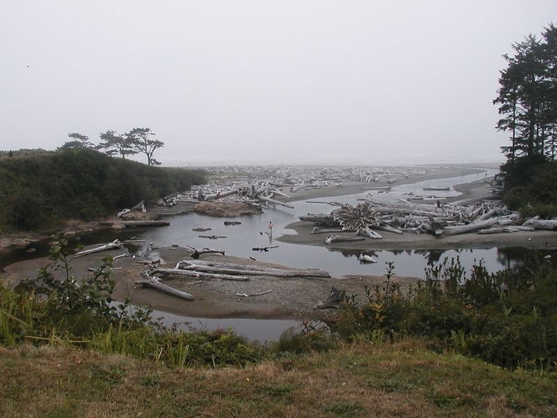 Aug. 18. THE LOGS AND RIVER AT KALALOCH