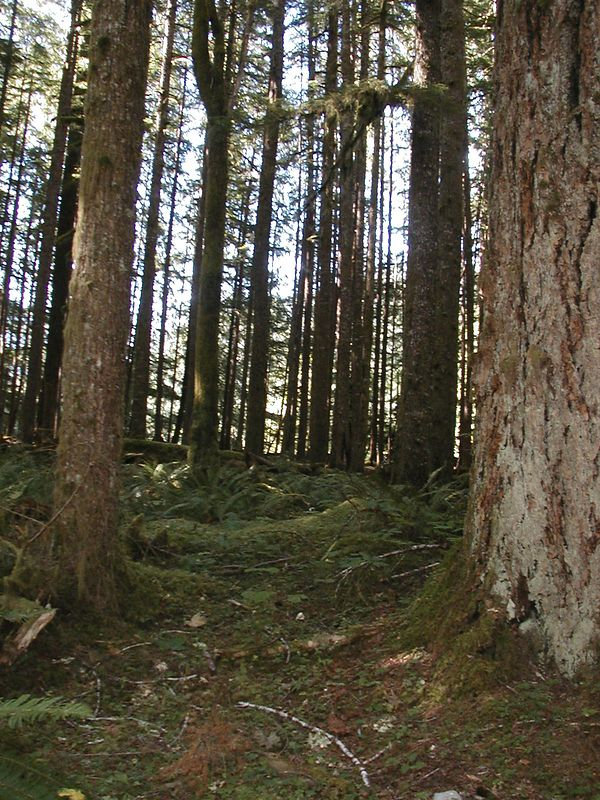 MORE RAIN FOREST
