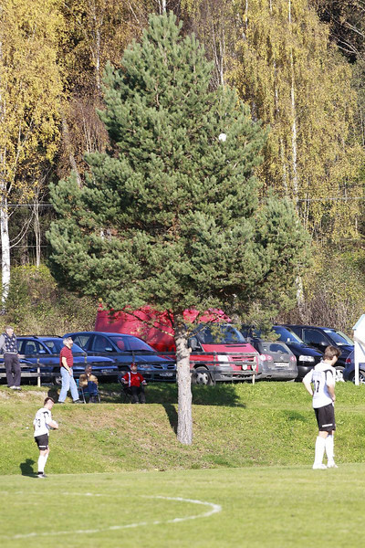 Det er en ball høyt oppi buska, om noen skulle lure på hva bildet egentlig er av!