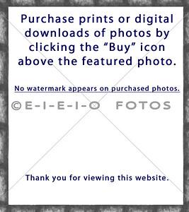 0001 EIEIO Fotos PURCHASE 2