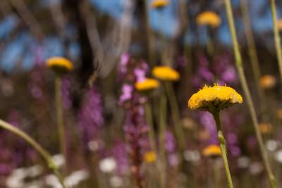 So many wild flowers