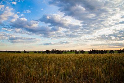 Wimmera big skies