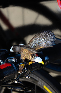 OK, I didn't get the story on who (it was team Garmin) or why somebody would be riding on the wings of eagles, but it looked pretty funny.