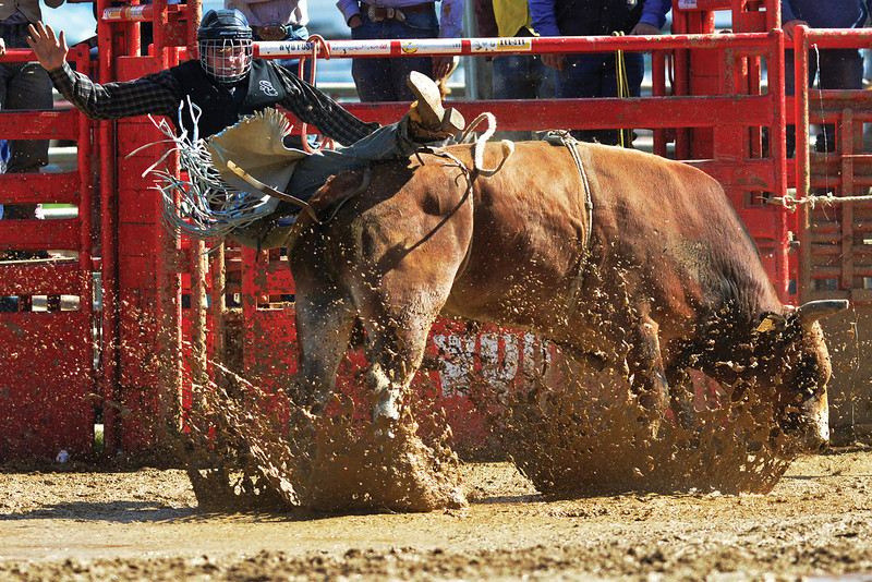 53rd Sheridan College Pat Hamilton Memorial Rodeo in September. (Brad Estes