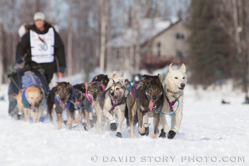 Jessie Royer's lead dogs scope out the sidelines as they make their way across Long Lake.