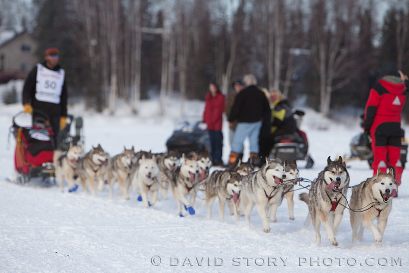 Michael Ellis and his team of AKC Siberian Huskies.