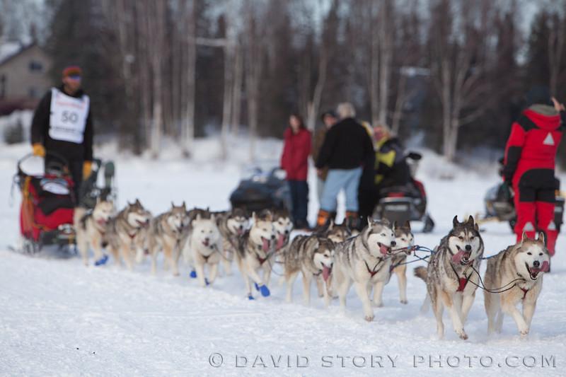 Michael Ellis and his team of AKC Siberian Huskies.