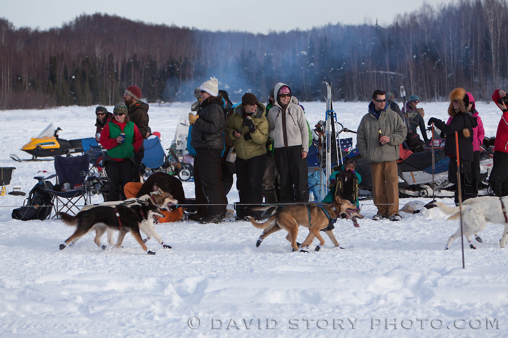 Dogs running by grab the attention of spectators of the 2013 Iditarod.