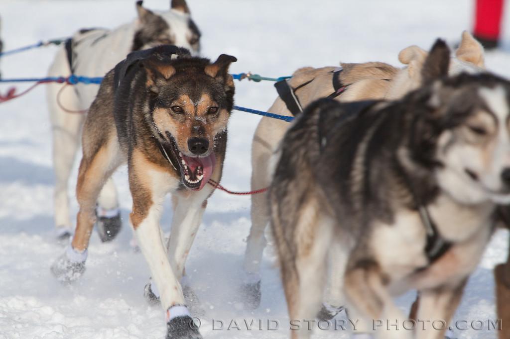 20130303_Iditarod_199