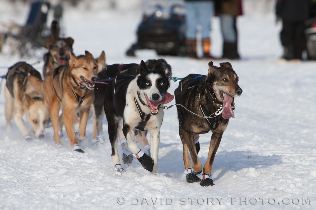 Joar Leifseth Ulsom's lead dogs pull the line tight.