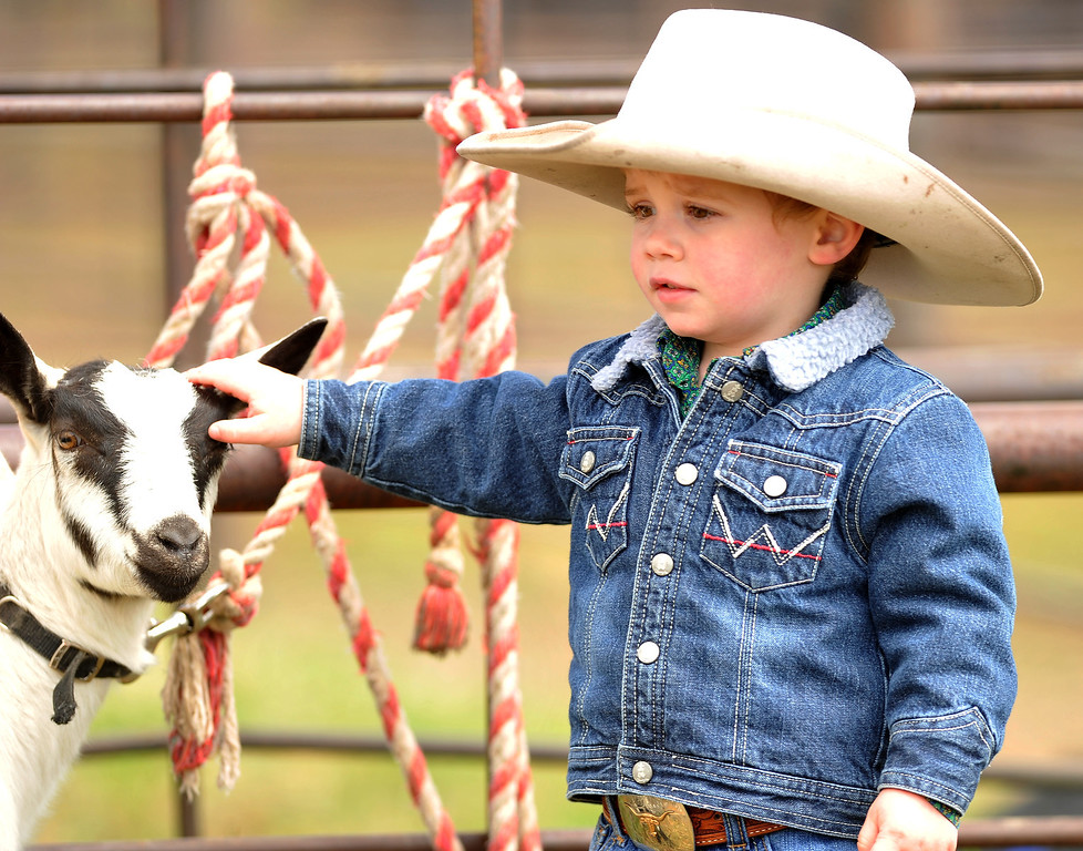 Stetson Tillery, 2, pets a goat before the goat tying event Saturday at the Young Riders Rodeo at the Sheridan County Fairgrounds. The Sheridan Press|Mike Pruden