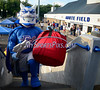 9/6/2014 Mike Orazzi | Staff<br /> CCSU mascot Kizer before the CCSU Albany football game in New Britain on Saturday afternoon.