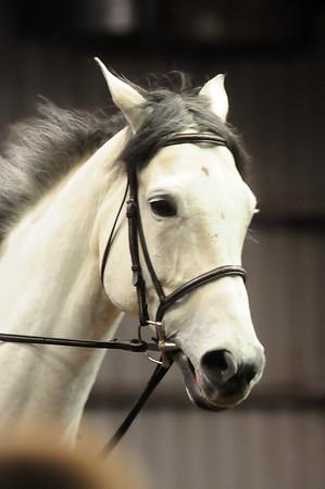 2014-11-8 Mon Valley Equestrian