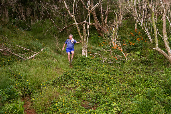 2015-08-08-HURT-Maunawili-Out-And-Back-Run-With-The-Pigs-0848