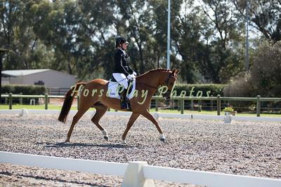 Horseland 6 Year Old Dressage Pony