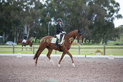 Penny Hill Park Stud Rising Star Award Horse