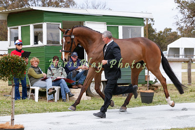 CCI*** Prestige Loans and Wealth Creation - Trot Up
