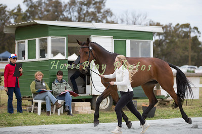 CCI* Reece's Structure - Trot Up