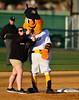 4/23/2016 Mike Orazzi | Staff<br /> The New Britain Bees mascot Saturday night.