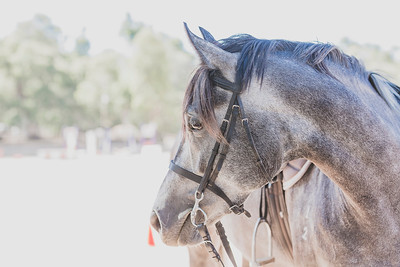 Showjumping Private Gallery