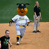 5/27/2017 Mike Orazzi | Staff<br /> The New Britain Bees' mascot during Saturday's game with the Southern Maryland Blue Crabs.