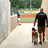 After cooling off in a kiddie pool of water to beat the heat, Navi, a belgian malinois, enters the Kokomo Municipal Stadium on June 19 with owner and trainer Chris Altherr, of Sit Means Sit. Navi, who is nearly 2 years old, is the Kokomo Jackrabbits' bat dog.<br /> Kelly Lafferty Gerber | Kokomo Tribune