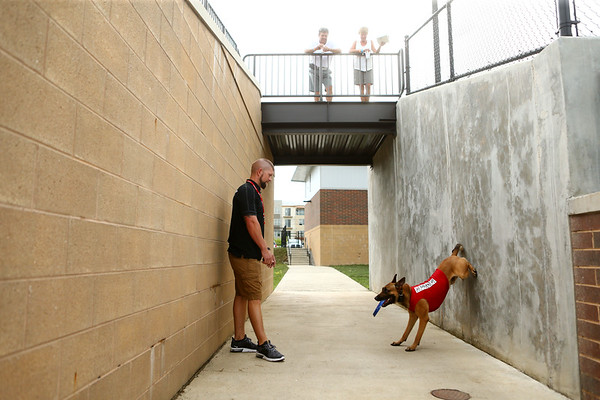 Navi, a belgian malinois, enjoys his first year as the Kokomo Jackrabbits' bat dog at a home baseball game on June 19, 2018. He is almost 2 years old and is Chris and Breanne Altherr's dog they've trained through their Sit Means Sit Kokomo franchise.<br /> Kelly Lafferty Gerber   Kokomo Tribune