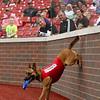 Navi, a belgian malinois, entertains the crowd at the Kokomo Municipal Stadium on June 19 in between innings. Navi, who is nearly 2 years old, is enjoying his first year as the Kokomo Jackrabbits' bat dog.<br /> Kelly Lafferty Gerber | Kokomo Tribune