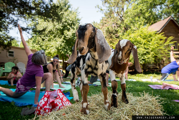 2018 (May) Mothers Day Goat Yoga / 90 Degree Yoga Anderson / Split Creek Farm