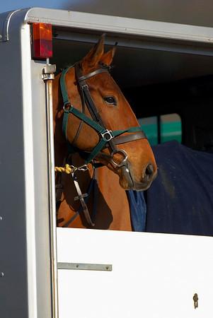 4 Shires Hunt @ Chatsworth 17/2/2008