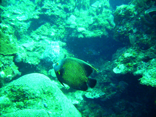 DIGITAL CAMERA<br /> This is a French Angelfish
