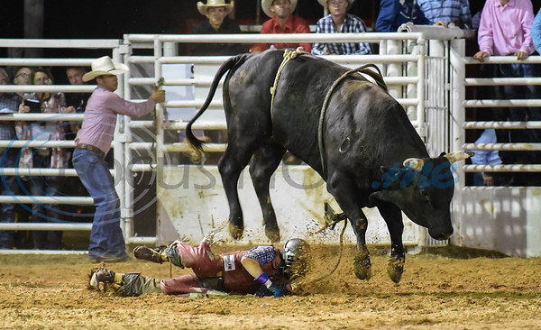 A bull rider hits the dirt at the 2019 Nicky Wheeler Memorial Bull Riding event in Jacksonville. Forty bull riders competed in the event which took place on Saturday, September 28. (Jessica T. Payne/Tyler Morning Telegraph)
