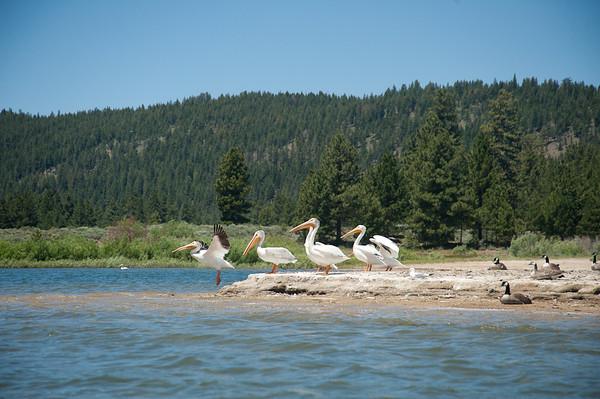 A day of kayaking on Lake Davis