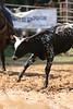 Liberty MS Rodeo 09 09 2007 B 102