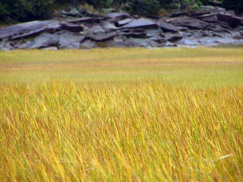 The colours were impressive on the long marsh grasses even on this grey day.