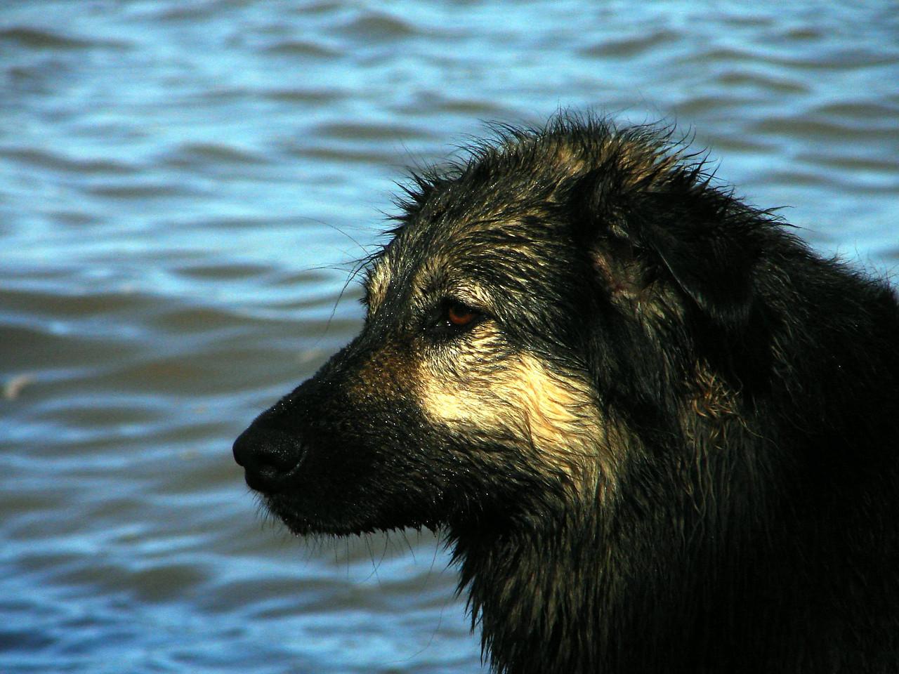 Wet dog...tired dog