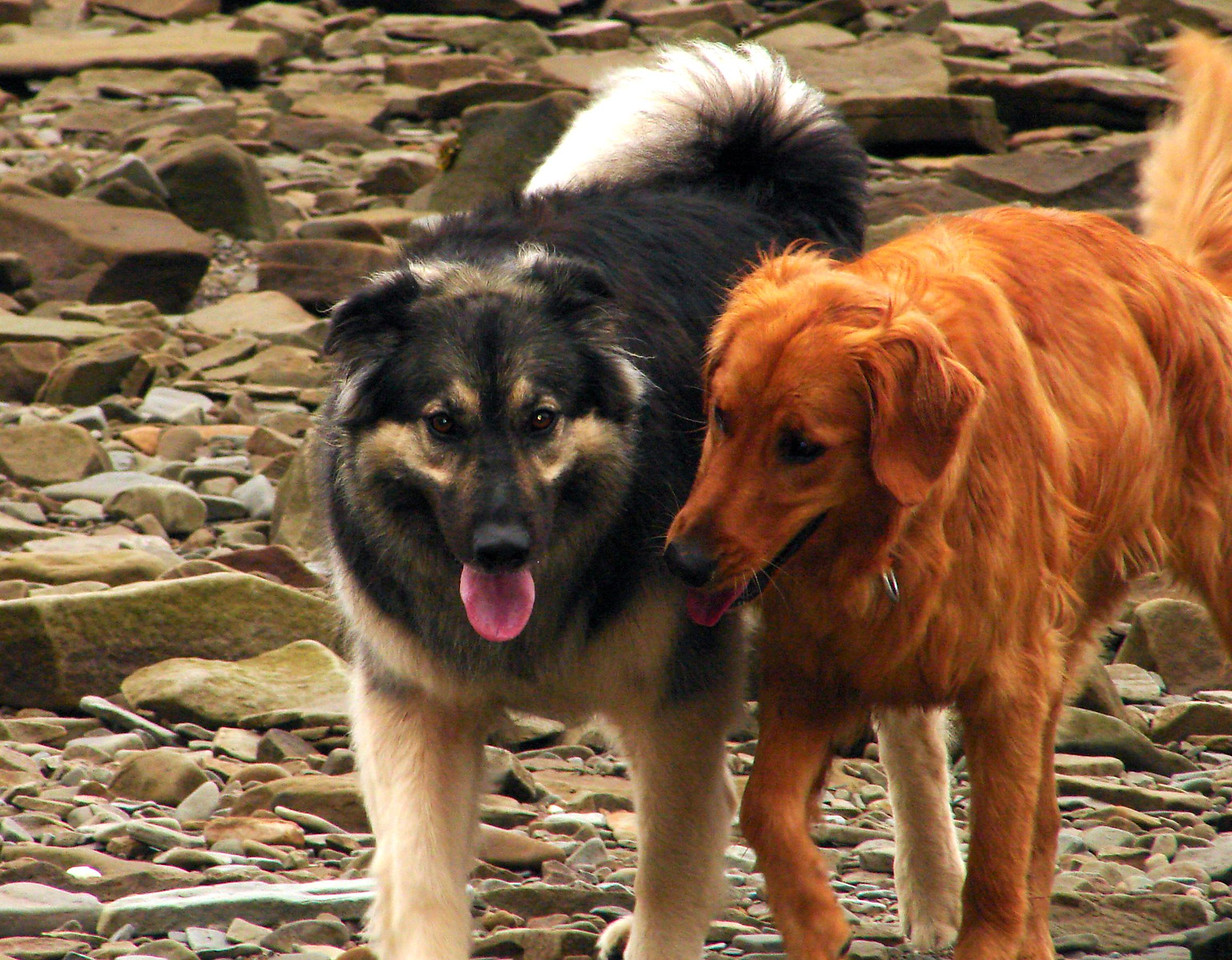 Sadie just LOVES Bailey. They make a lovely couple :)