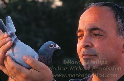 Noel Muscianesi holds his favorite racing pigeon at his coop in Carroll Gardens, Brooklyn.