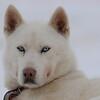 Huskies_Givrine Hiver 2009_0020