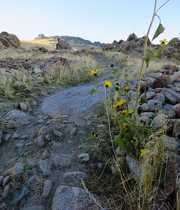 A few sunflowers hang on yet on the switchbacks up.
