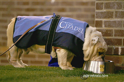 Citadel mascot taking a drink of water