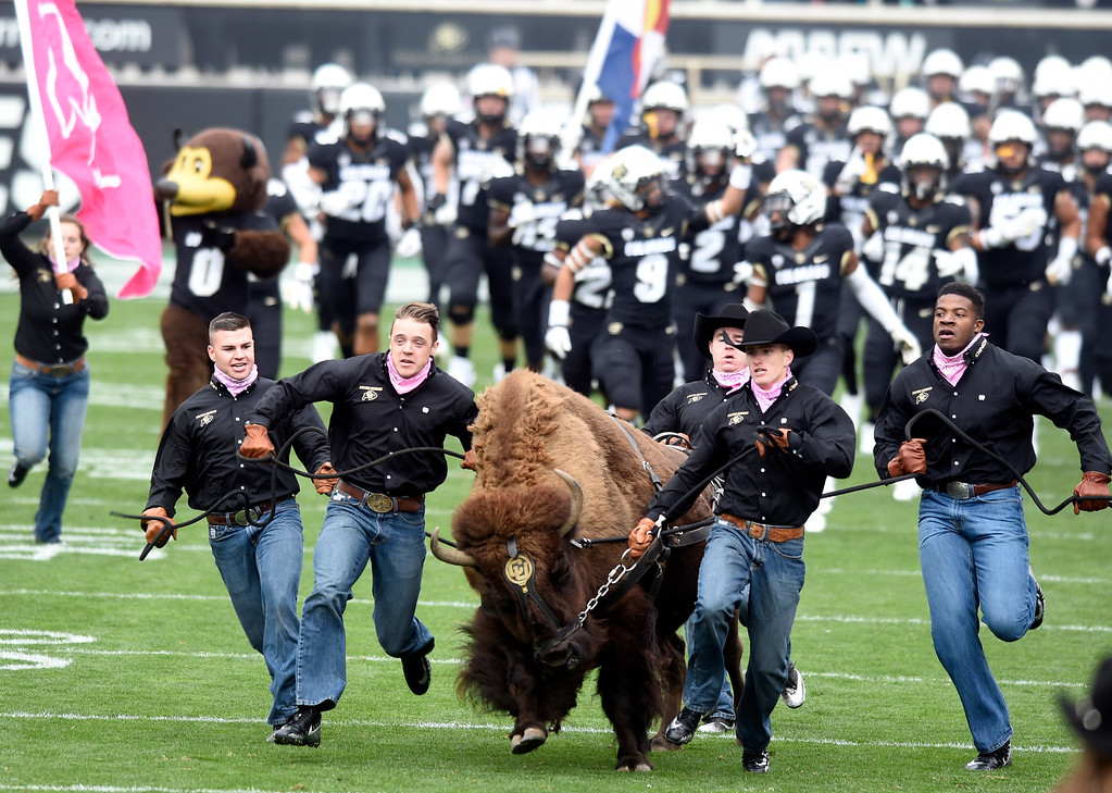 . BOULDER, CO: October 6, 2018: University of Colorado\'s  Ralphie makes her run to begin the game  with Arizona State on October 6, 2018. (Photo by Cliff Grassmick/Staff Photographer)