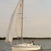 AYC 2014 Cat 22 Regatta-1335