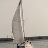 AYC 2014 Cat 22 Regatta-1326