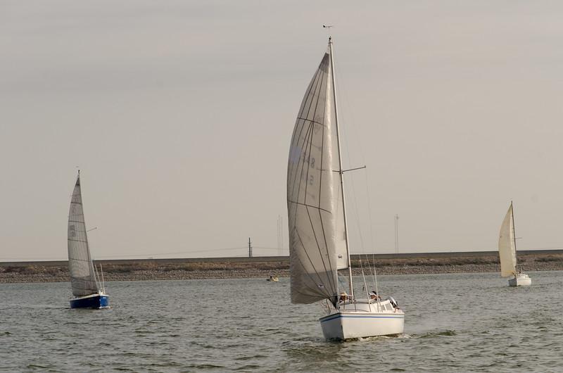 AYC 2014 Cat 22 Regatta-1324