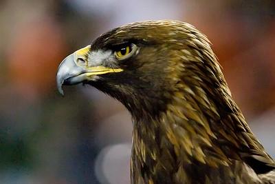 Auburn vs. Alabama - 2007