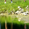 8-1-12<br /> Girls High School Golf - Kokomo Invitational<br /> Northwestern's Krista McClure chipping onto 5.<br /> KT photo | Tim Bath
