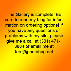 Gallery uploaded see blog for order options