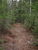 Result of nipping is a trail that is pleasing to the eye and guides the hiker through the forest.